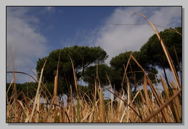 Pineta delle Acque Rosse - Riserva del Litorale Romano