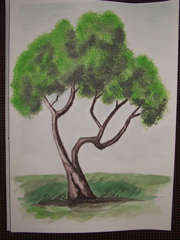 Corso di disegno naturalistico 7 lezione forum natura for Chioma albero