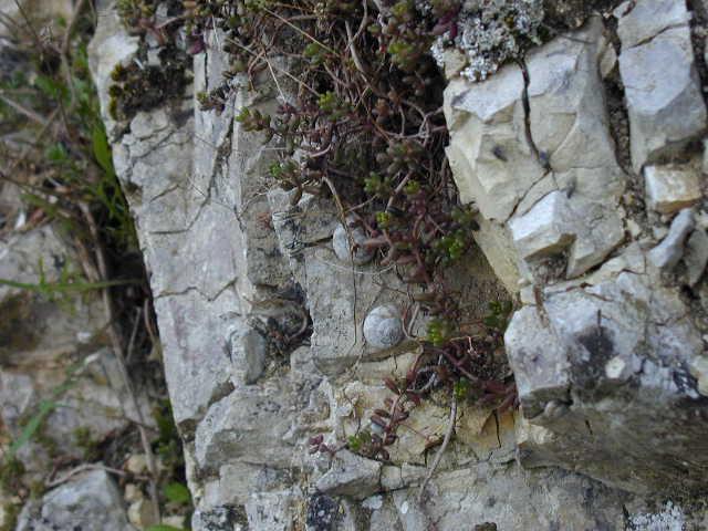 Gastropodi e Ambienti del Parco del Pollino