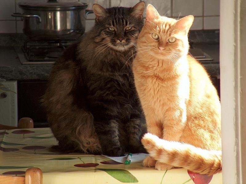 ma non sono dolci, dolci? dans gatti HPIM2818bis.jpg_2007111022736_HPIM2818bis
