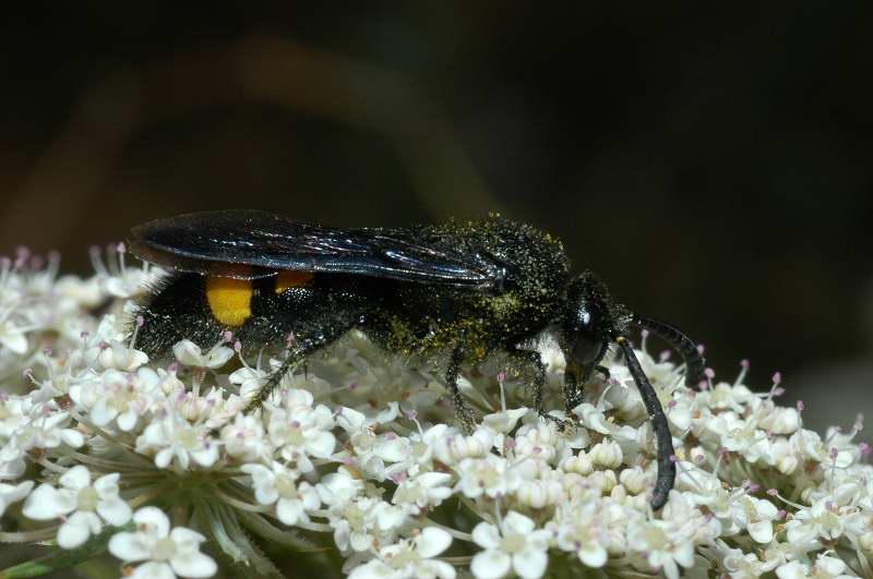 Pomeriggio entomofilo 3