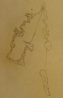 L. gruppo luctuosus Moquin-Tandon dal Val di Gressoney (AO)